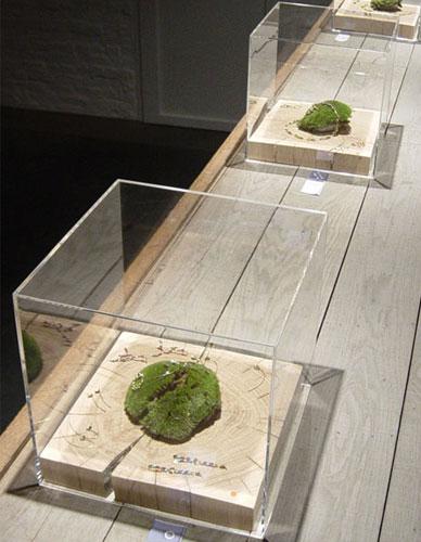 Capot Qube qualité musée